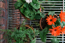 potted fern and gerber daisy on a plant stand