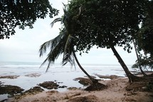trees and palm trees on a beach