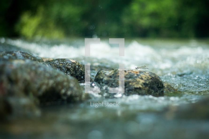 wet rocks in a creek