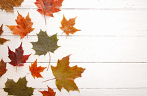 fall leaves on white wood background