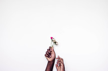 hands holding up picked flowers against a white background