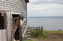 Horse in a barn by the ocean.