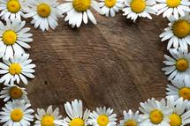 frame of white daisies
