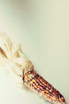 fall dried corn