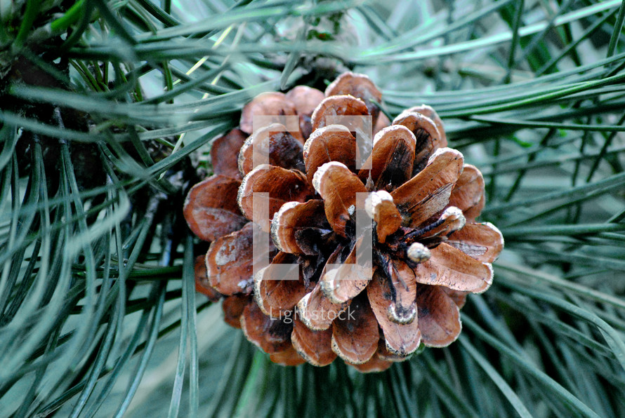 pinecone on a wreath