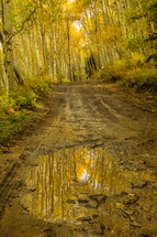 dirt road and fall forest