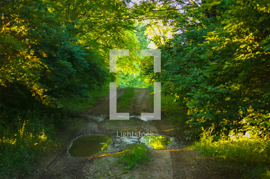 a puddle on a rural dirt road