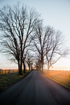 bare winter trees along a rural road at sunrise