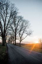 bare trees lining a rural road