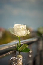 white roses tied to a metal railing