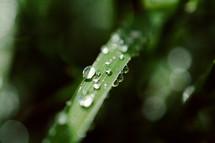 wet blade of grass