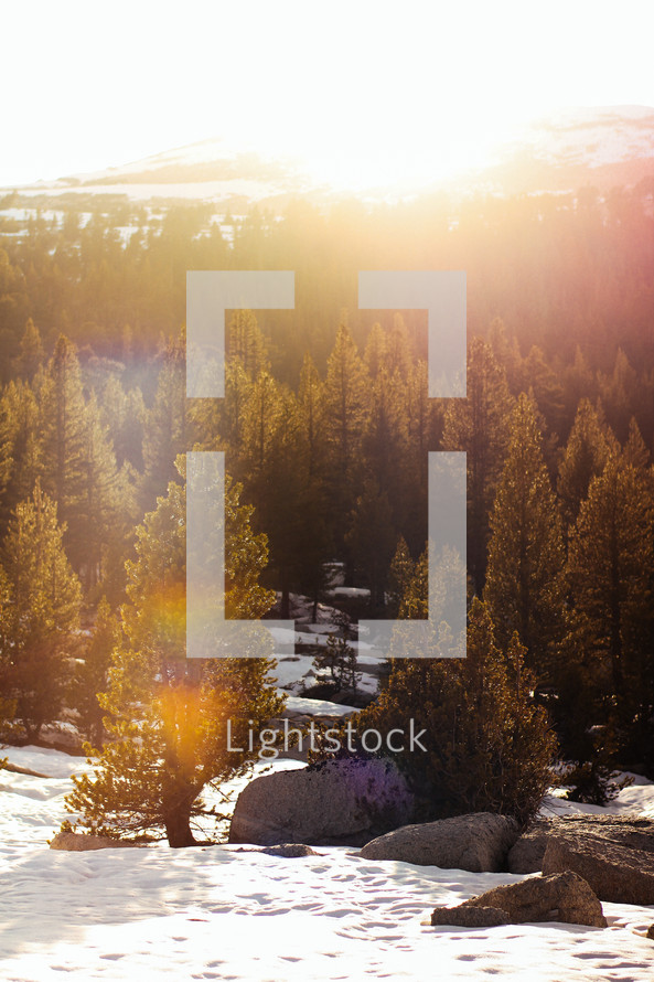 morning sunlight over a winter forest with snow