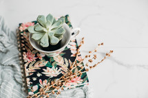 succulent plant in a tea cup on a journal