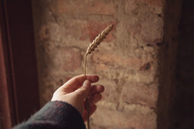 a woman holding up a wheat grain