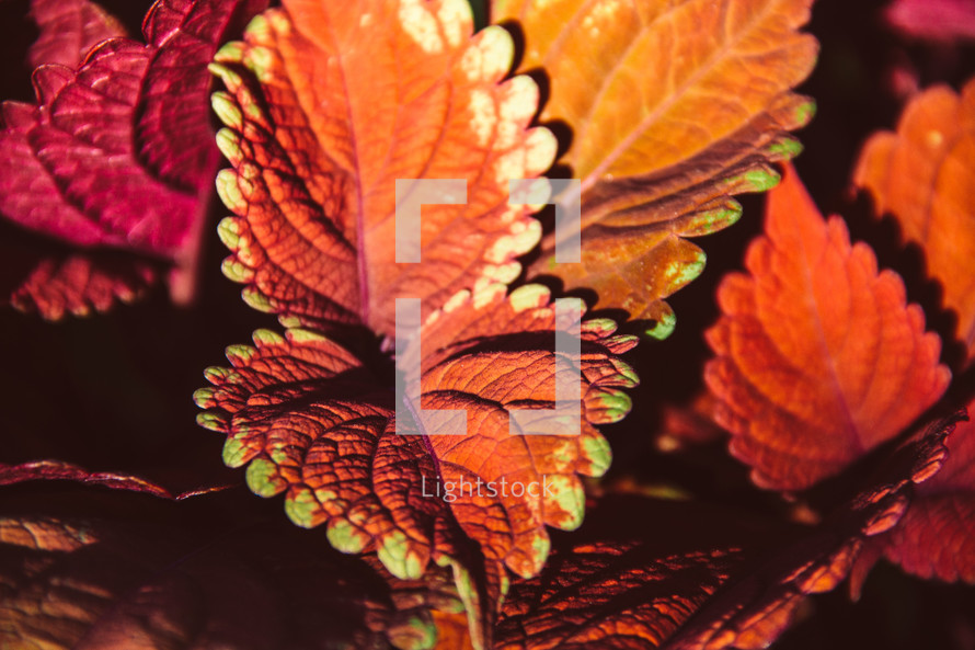 red leaves in a garden