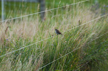 bird perched on fence wire