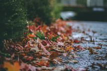 wet fall leaves on asphalt
