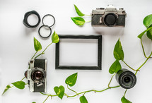 frame, camera, vines, camera lenses