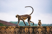 A monkey on the top of a wall.