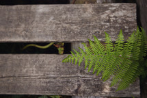 wood fence and ferns