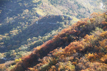 autumn trees in the mountains