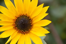 yellow flower outdoors. 