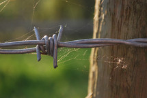 Barbed wire with spider webs on it.