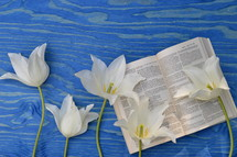 white flowers and Bible on blue wood background