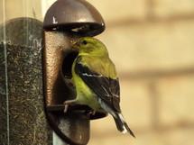 finch at a bird feeder