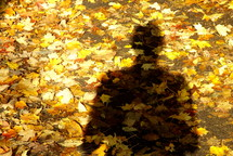 Shadow in the fallen autumn leaves.