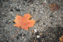fall leaf on pavement