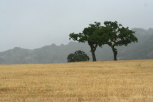 isolated trees on an open field