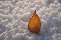 brown leaf in snow