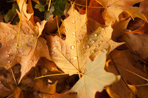 rain droplets on fall leaves