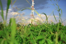 communication tower in a corn field