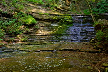 A wooded stream