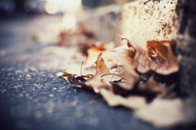 brown fall leaves on asphalt