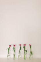 Pink tulips in vases on a white background.