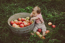 Toddler boy sitting in the grass reaching into a bucket of apples.