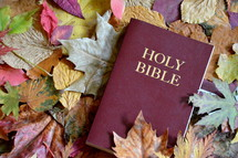bible between colorful autumn leaves.  autumn, fall, leaf, leaves, colorfully, colorful, multicolored, change, changed, changing, fallen, season, seasons, bright, red, orange, yellow, brown, dead, dying, die, death, dead leaves, background, bible, word, Gods word, daily, need, needing, bible study, read, reading, everyday, focus, scripture, holy book, study, learn, learning, quiet time, time, quiet, plant, nature, outdoor, green, natural, October, November, mood, vanish, fade, pass, fallen off, texture, leaf pile