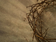 edge of a crown of thorns