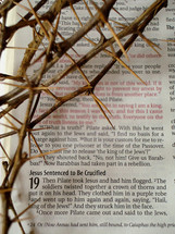 Bible passage with the crown of thorns (John 19:2)