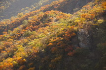 fall trees on a mountain side