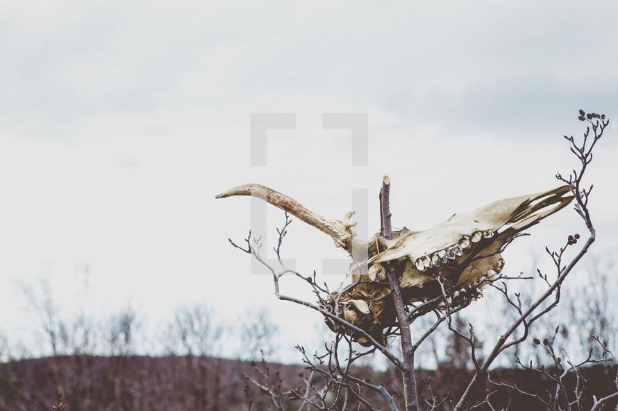 a skull on a stick