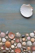variety of seashells on cyan wooden plank