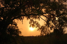 Sunset behind an arched tree linb.