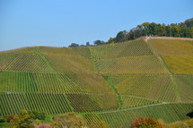 vineyard in the bright colors of autumn.  vines, vineyard, vine, tendril, leaf, leaves, tendril of vine, vine stock, branch, branches, hold, hold on, clutch, hang on, stay, remain, dwell, continue, keep, grow, growth, growing, fruit, fructiferous, fruit setting, bear, yield, grapes, grape, acreage, vineyard cultivation, cultivation, harvest, harvesting, rich, vintner, winegrower, wine grower, nature, crop,  natural, plant, plants, outdoor, fruits, ripe, mellow, mellowly, autumn, fall,  kingdom of heaven, landowner, kingdom, parable, workers, Matthew 20, hire, hired, last, first, generous, color, colors, colorfully, colorful, change, changing, red, green, season, seasons