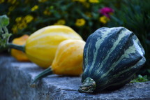 row of fall gourds.  row, fall, autumn, gourds, yellow, green, thanksgiving, harvest, thanks, fruits, fruit, first, firstfruit, crops, field, festival, vegetable, vegetables, greenstuff, crop, yield, harvesting, rich, bountiful, plentiful, plenty, bounteous, gather, reap, bring in, produce, abundant, abundance, present, thanks giving, harvest festival, November, pumpkin, garden, gardening, decorated, decoration, decorating, food, eat, eating, groceries, grocery, nourishments, nourishment, biological, organic, biologic, biologically