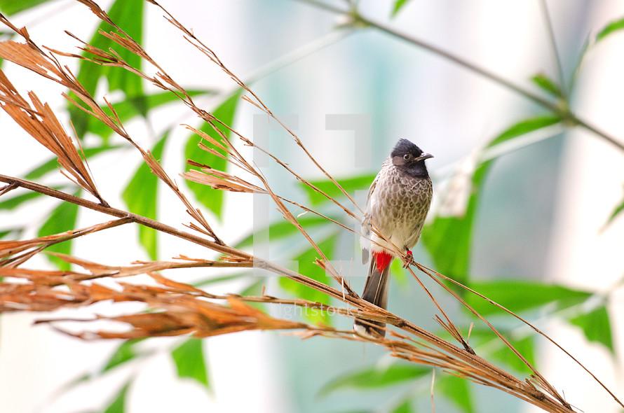 Bird sitting in a tree