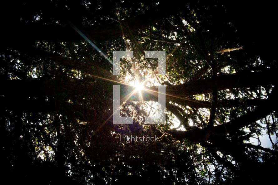 Sunburst through trees